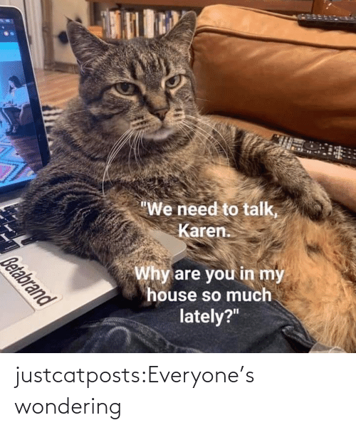 A Href: justcatposts:Everyone's wondering