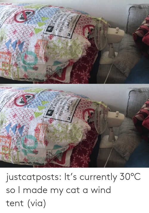 So I: justcatposts:  It's currently 30°C so I made my cat a wind tent (via)