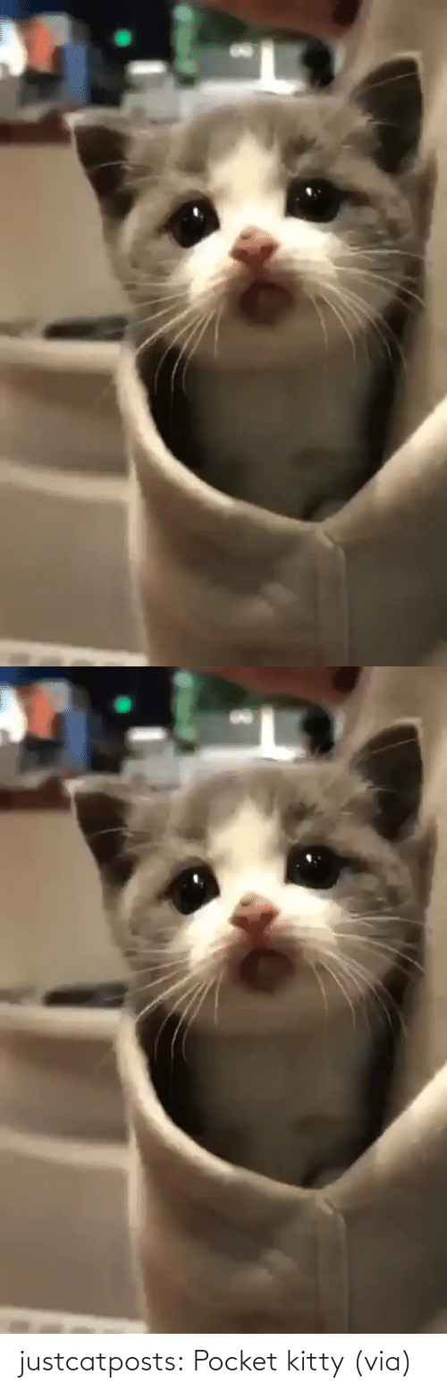 style: justcatposts:  Pocket kitty(via)