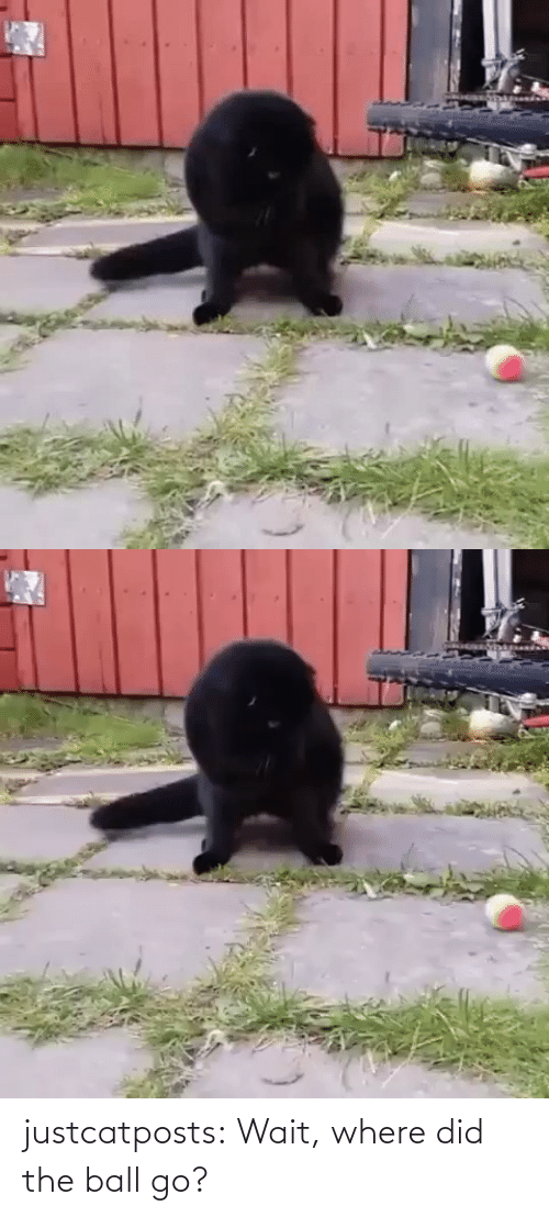 wait: justcatposts:  Wait, where did the ball go?