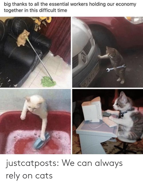 Cats: justcatposts:  We can always rely on cats