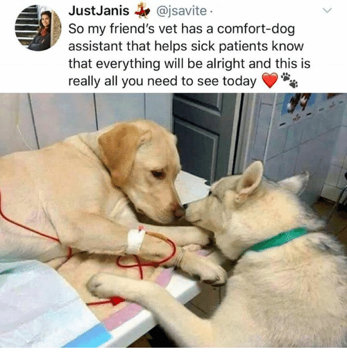 Dank, Friends, and Today: JustJanis @jsavite  So my friend's vet has a comfort-dog  assistant that helps sick patients know  that everything will be alright and this is  really all you need to see today