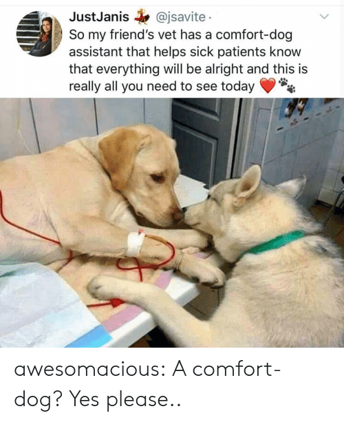Friends, Tumblr, and Blog: JustJanis @jsavite  So my friend's vet has a comfort-dog  assistant that helps sick patients know  that everything will be alright and this is  really all you need to see today awesomacious:  A comfort-dog? Yes please..