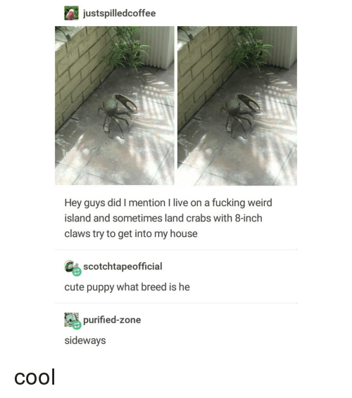 fucking weird: justspilledcoffee  Hey guys did I mention I live on a fucking weird  island and sometimes land crabs with 8-inch  claws try to get into my house  Gs scotchtapeofficial  cute puppy what breed is he  purified-zone  sideways cool