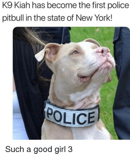 New York, Police, and Pitbull: K9 Kiah has become the first police  pitbull in the state of New York!  OLICE Such a good girl 3