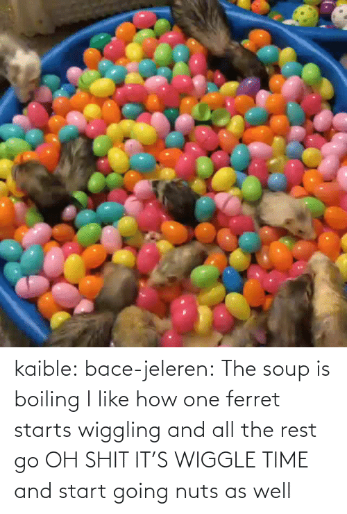 nuts: kaible: bace-jeleren: The soup is boiling    I like how one ferret starts wiggling and all the rest go OH SHIT IT'S WIGGLE TIME and start going nuts as well