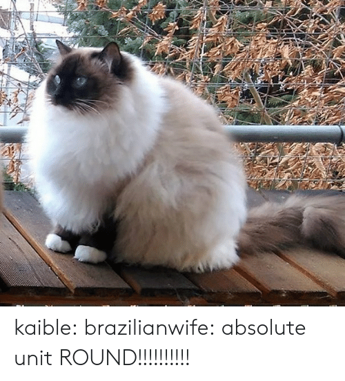 Tumblr, Blog, and Http: kaible: brazilianwife: absolute unit ROUND!!!!!!!!!!