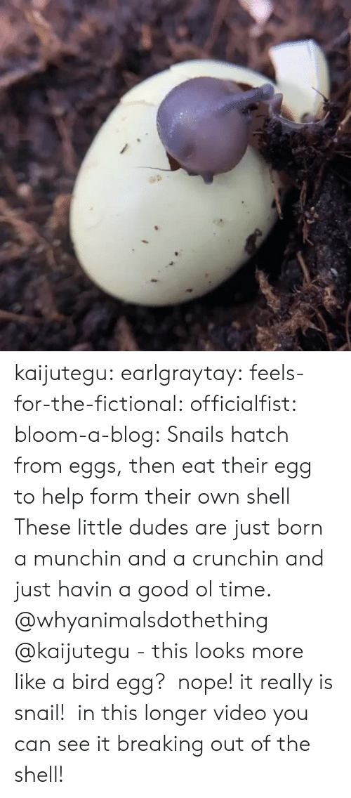gyroscope: kaijutegu: earlgraytay:  feels-for-the-fictional:  officialfist:  bloom-a-blog:  Snails hatch from eggs, then eat their egg to help form their own shell  These little dudes are just born a munchin and a crunchin and just havin a good ol time.    @whyanimalsdothething @kaijutegu - this looks more like a bird egg?   nope! it really is snail!  in this longer video you can see it breaking out of the shell!