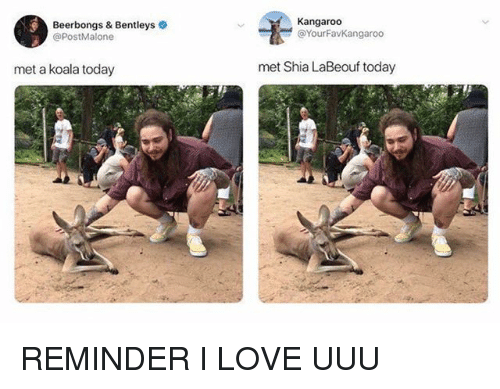 Love, Shia LaBeouf, and Today: Kangaroo  Beerbongs & Bentleys  @PostMalone  YourFavKangaroo  met a koala today  met Shia LaBeouf today REMINDER I LOVE UUU