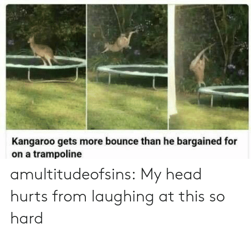 Trampoline: Kangaroo gets more bounce than he bargained for  on a trampoline amultitudeofsins: My head hurts from laughing at this so hard