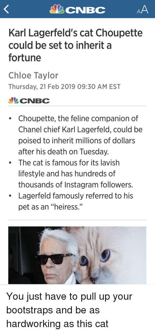 "karl lagerfeld: Karl Lagerfeld's cat Choupette  could be set to inherit a  fortune  Chloe Taylor  Thursday, 21 Feb 2019 09:30 AM EST  CNBC  Choupette, the feline companion of  Chanel chief Karl Lagerfeld, could be  poised to inherit millions of dollars  after his death on Tuesday  The cat is famous for its lavish  lifestyle and has hundreds of  thousands of Instagram followers.  Lagerfeld famously referred to his  pet as an ""heiress."""
