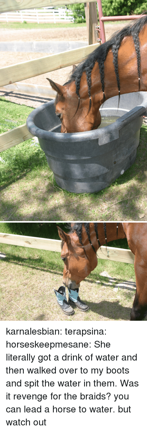 Braids: karnalesbian: terapsina:  horseskeepmesane:  She literally got a drink of water and then walked over to my boots and spit the water in them.   Was it revenge for the braids?  you can lead a horse to water. but watch out