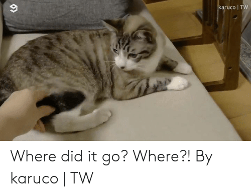 where did: karuco TW Where did it go? Where?!  By karuco | TW