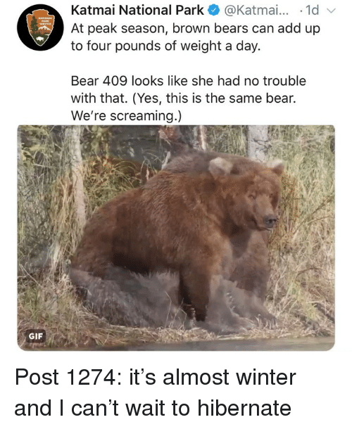 Gif, Memes, and Winter: Katmai National Park@Katmai... 1d  At peak season, brown bears can add up  to four pounds of weight a day.  Bear 409 looks like she had no trouble  with that. (Yes, this is the same bear.  We're screaming.)  GIF Post 1274: it's almost winter and I can't wait to hibernate