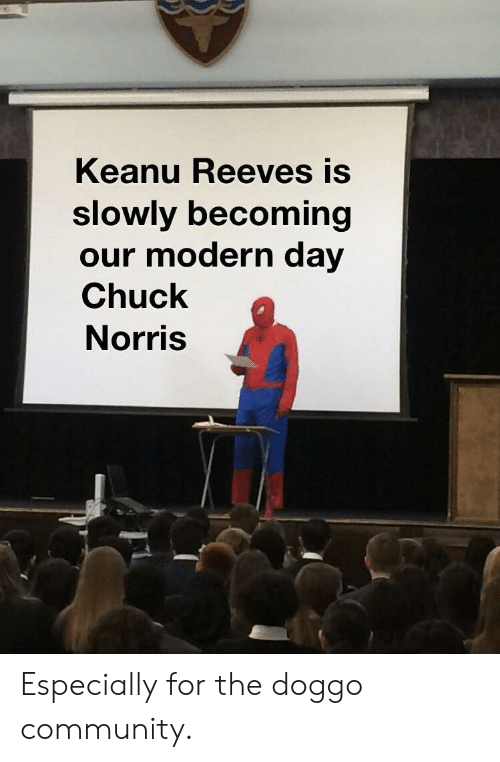 Chuck Norris: Keanu Reeves is  slowly becoming  our modern day  Chuck  Norris Especially for the doggo community.