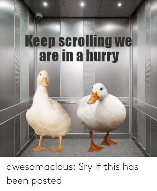 Tumblr, Blog, and Been: Keep scrolling we  are in a hurry awesomacious:  Sry if this has been posted