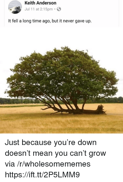 Mean, Time, and Never: Keith Anderson  Jul 11 at 2:15pm  It fell a long time ago, but it never gave up. Just because you're down doesn't mean you can't grow via /r/wholesomememes https://ift.tt/2P5LMM9