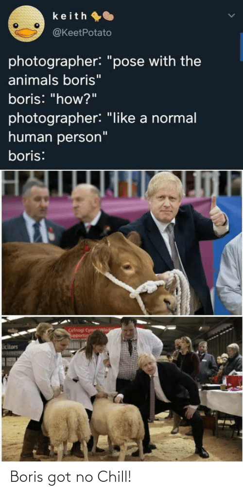"pose: keith O  @KeetPotato  photographer: ""pose with the  animals boris""  boris: ""how?""  photographer: ""like a normal  human person""  boris:  Cefnogi Cym  upportin  icitors Boris got no Chill!"