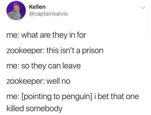 I Bet, Prison, and Penguin: Kellen  @captainkalvis  me: what are they in for  zookeeper: this isn't a prison  me: so they can leave  zookeeper: well no  me: [pointing to penguin] i bet that one  killed somebody