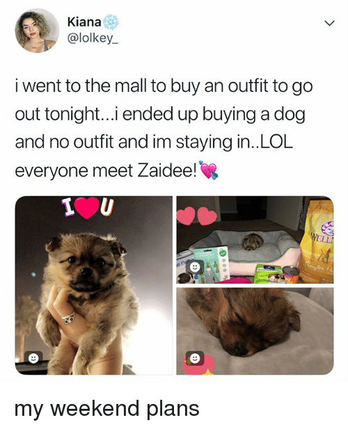 My Weekend: Kiana  @lolkey  i went to the mall to buy an outfit to go  out tonight..i ended up buying a dog  and no outfit and im staying in..LOL  everyone meet Zaidee! my weekend plans