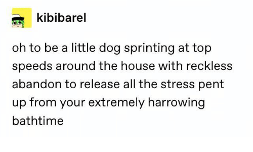 abandon: kibibarel  oh to be a little dog sprinting at top  speeds around the house with reckless  abandon to release all the stress pent  up from your extremely harrowing  bathtime