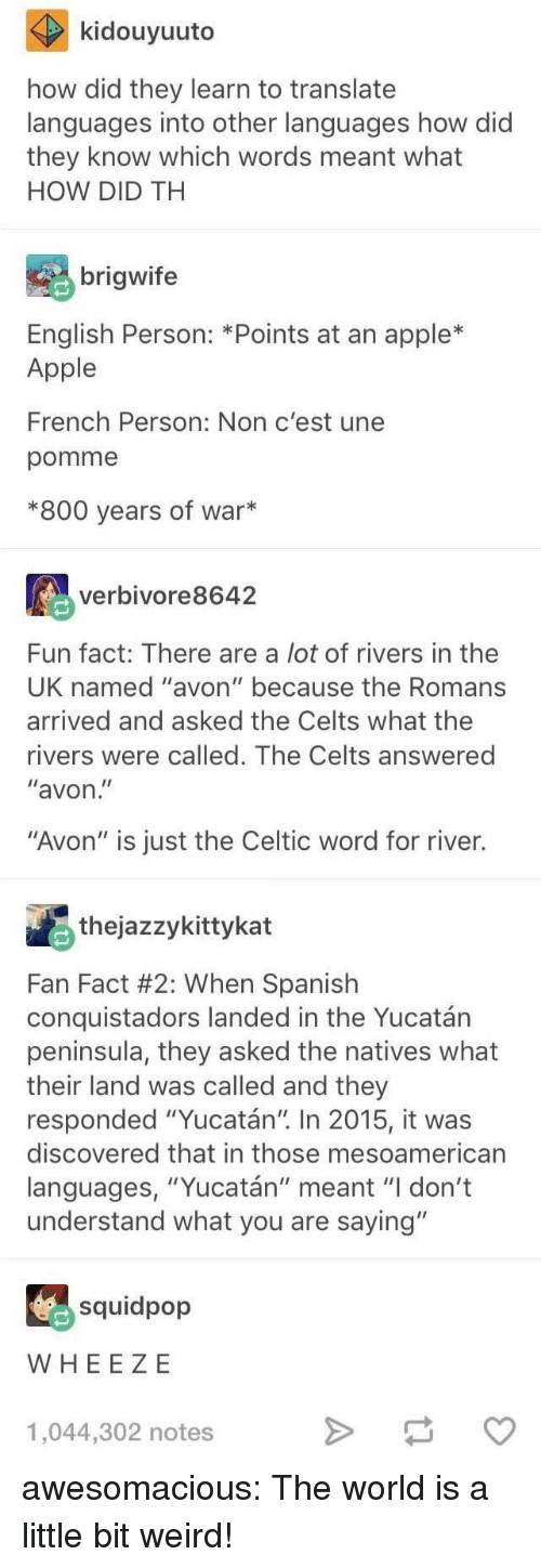 """Apple, Avon, and Celtic: kidouyuuto  how did they learn to translate  languages into other languages how did  they know which words meant what  HOW DID TH  brigwife  English Person: *Points at an apple*  Apple  French Person: Non c'est une  pomme  *800 years of war*  verbivore8642  Fun fact: There are a lot of rivers in thee  UK named """"avon"""" because the Romans  arrived and asked the Celts what the  rivers were called. The Celts answered  """"avon  """"Avon"""" is just the Celtic word for river.  thejazzykittykat  Fan Fact #2: When Spanish  conquistadors landed in the Yucatán  peninsula, they asked the natives what  their land was called and they  responded """"Yucatán"""" In 2015, it was  discovered that in those mesoamerican  languages, """"Yucatán"""" meant """"I don't  understand what you are saying""""  squidpop  WHEE ZE  1,044,302 notes awesomacious:  The world is a little bit weird!"""