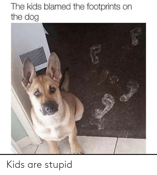 stupid: Kids are stupid