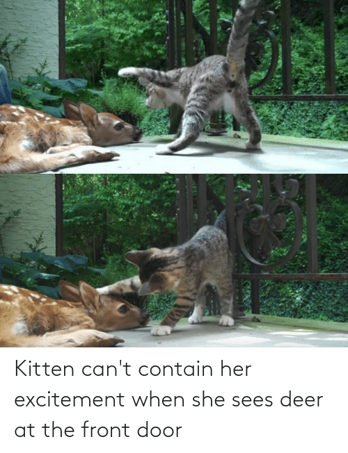 excitement: Kitten can't contain her excitement when she sees deer at the front door