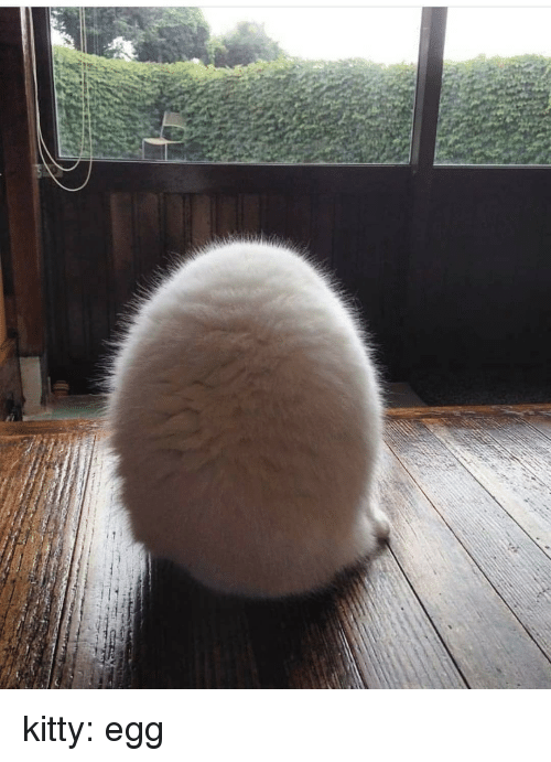 Tumblr, Blog, and Http: kitty:  egg