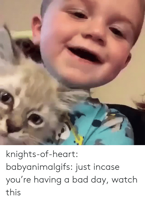 Bad day: knights-of-heart:  babyanimalgifs: just incase you're having a bad day, watch this