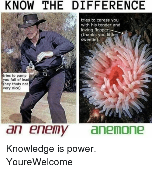 Littled: KNOW THE DIFFERENCE  tries to caress you  with his tender and  loving floppers  loving floppertfle  (thanks you littl  sweetie)  tries to pump  you full of lead  (hey thats not  very nice)  an enemyanemone Knowledge is power. YoureWelcome
