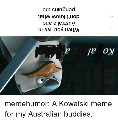Meme, Tumblr, and Australia: Ko al  When you live in  Australia and  don't know what  penguins are memehumor:  A Kowalski meme for my Australian buddies.