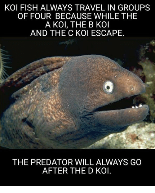 Memes, Fish, and Predator: KOI FISH ALWAYS TRAVEL IN GROUPS  OF FOUR BECAUSE WHILE THE  A KOl, THE B KOI  AND THE C KOI ESCAPE.  THE PREDATOR WILL ALWAYS GO  AFTER THE D KOl