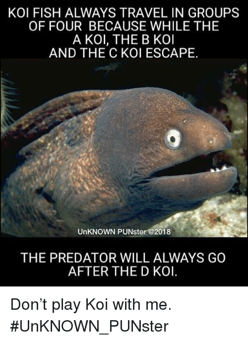 Memes, Fish, and Predator: KOI FISH ALWAYS TRAVEL IN GROUPS  OF FOUR BECAUSE WHILE THE  A KOl, THE B KOl  AND THE C KOI ESCAPE.  UnKNOWN PUNster @2018  THE PREDATOR WILL ALWAYS GO  AFTER THE D KOI. Don't play Koi with me. #UnKNOWN_PUNster