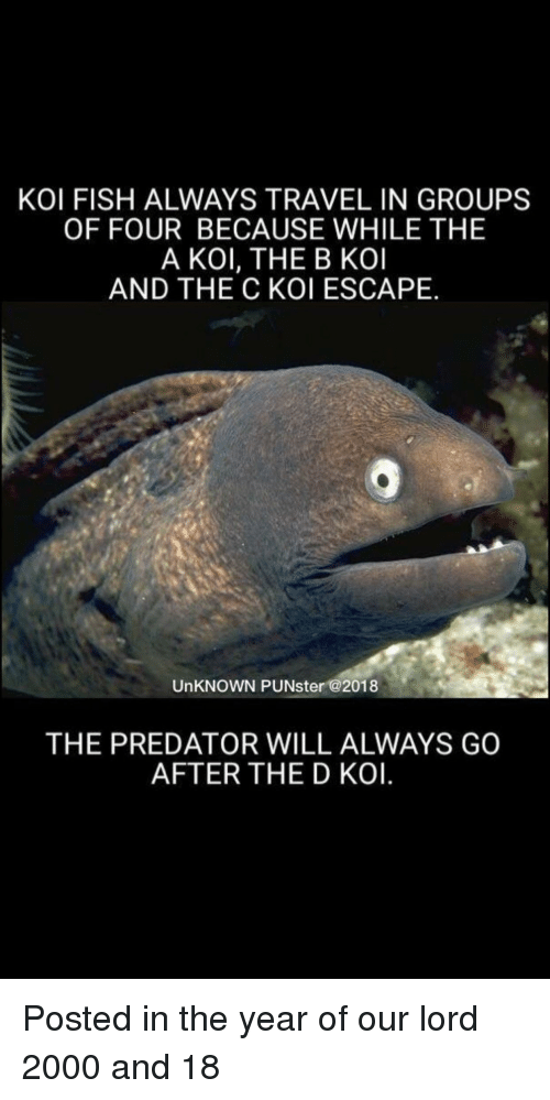 Fish, Predator, and Travel: KOI FISH ALWAYS TRAVEL IN GROUPS  OF FOUR BECAUSE WHILE THE  A KOl, THE B KOI  AND THE C KOI ESCAPE.  UnKNOWN PUNster @2018  THE PREDATOR WILL ALWAYS GO  AFTER THE D KOI.