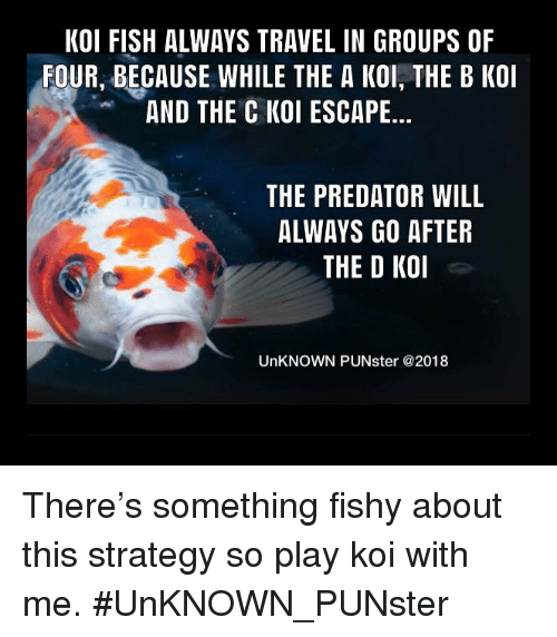 Memes, Fish, and Predator: KOI FISH ALWAYS TRAVEL IN GROUPS OF  FOUR, BECAUSE WHILE THE A KOI, THE B KOI  AND THE C KOI ESCAPE...  THE PREDATOR WILL  ALWAYS GO AFTER  THE D KOI  UnKNOWN PUNster @2018 There's something fishy about this strategy so play koi with me. #UnKNOWN_PUNster