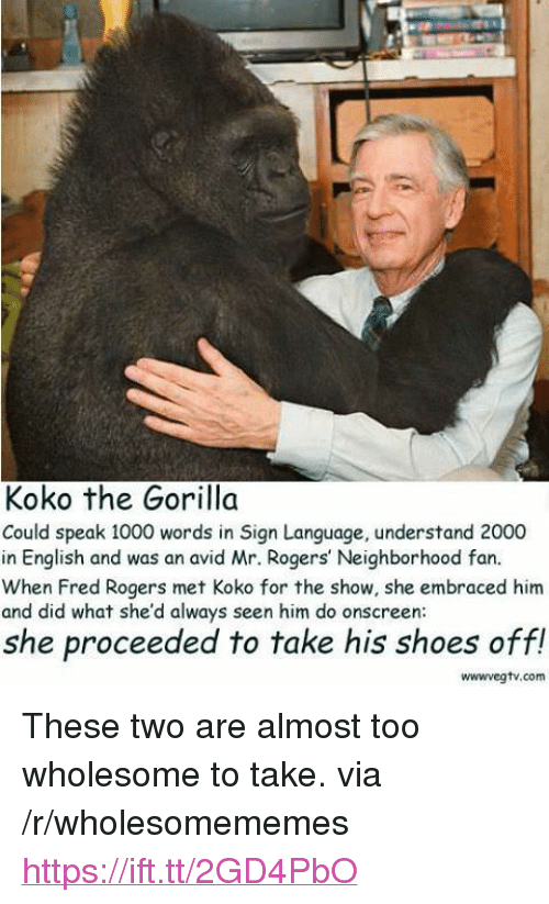 "Shoes, Sign Language, and English: Koko the Gorilla  Could speak 1000 words in Sign Language, understand 2000  in English and was an avid Mr. Rogers' Neighborhood fan.  When Fred Rogers met Koko for the show, she embraced him  and did what she'd always seen him do onscreen  she proceeded to take his shoes off!  wwwvegtv.com <p>These two are almost too wholesome to take. via /r/wholesomememes <a href=""https://ift.tt/2GD4PbO"">https://ift.tt/2GD4PbO</a></p>"