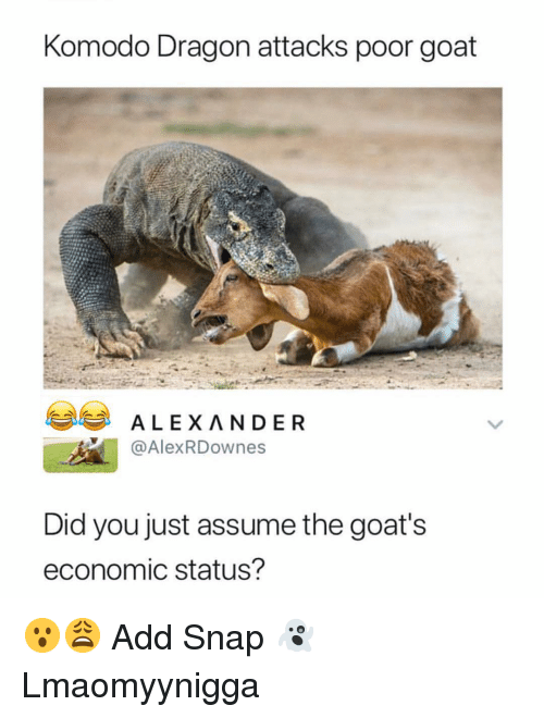 Memes, Goat, and 🤖: Komodo Dragon attacks poor goat  ALEXANDER  @AlexRDownes  Did you just assume the goat's  economic status? 😮😩 Add Snap 👻Lmaomyynigga