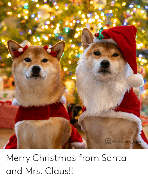 Christmas, Merry Christmas, and Santa: @kona and hana Merry Christmas from Santa and Mrs. Claus!!