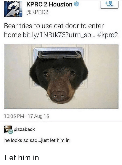 Memes, Bear, and Home: KPRC 2 Houston  @KPRC2  Bear tries to use cat door to enter  home bit.ly/1 NBtk73?utm. So.. #kpro2  10:05 PM 17 Aug 15  % pizzaback  he looks so sad...just let him in Let him in