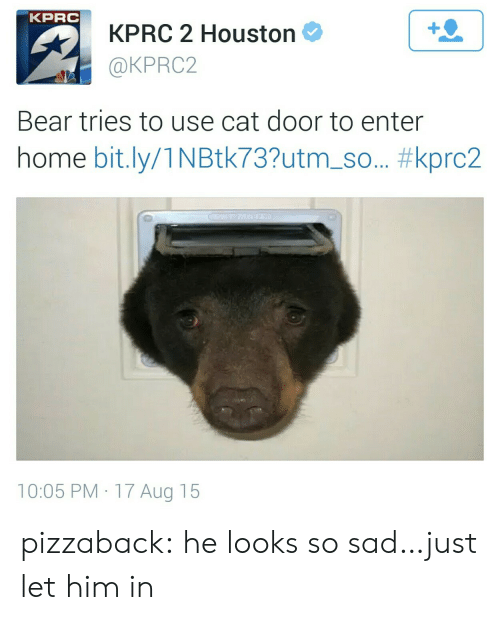 Houston: KPRC  KPRC 2 Houston  @KPRC2  1  Bear tries to use cat door to enter  home bit.ly/1 N Btk73?utm-so.. #kprc2  10:05 PM 17 Aug 15 pizzaback:  he looks so sad…just let him in