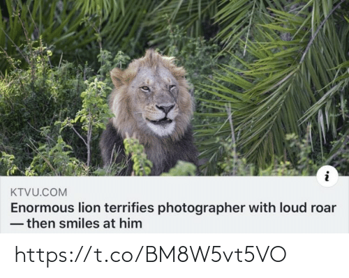 Smiles: KTVU.COM  Enormous lion terrifies photographer with loud roar  - then smiles at him https://t.co/BM8W5vt5VO