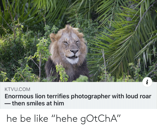 "Smiles: KTVU.COM  Enormous lion terrifies photographer with loud roar  -then smiles at him he be like ""hehe gOtChA"""