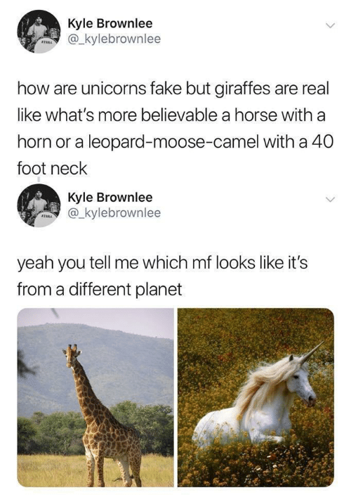 Fake, Yeah, and Horse: Kyle Brownlee  @_kylebrownlee  STAMA  how are unicorns fake but giraffes are real  like what's more believable a horse with a  horn or a leopard-moose-camel with a 40  foot neck  Kyle Brownlee  @_kylebrownlee  SZAMA  yeah you tell me which mf looks like it's  from a different planet