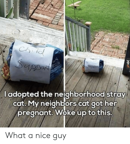nice guy: l adopted the neighborhood stray  cot. My neighbors cat got her  pregnant. Woke up to this What a nice guy