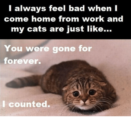 You Were Gone For Forever I Counted: l always feel bad when I  come home from work and  my cats are just like...  DI  You were gone for  forever.  I counted.