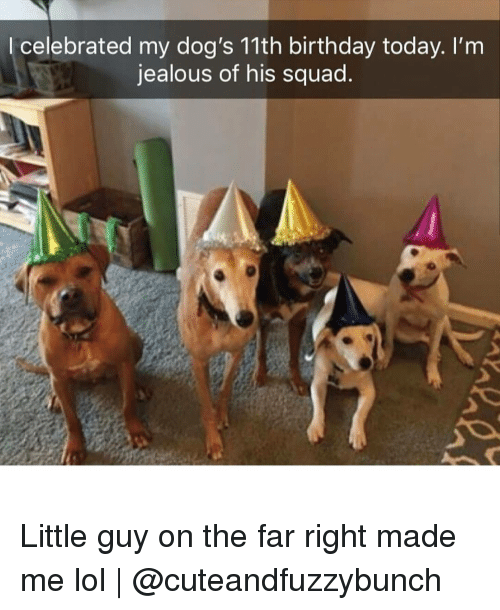 Im Jealous: l celebrated my dog's 11th birthday today. I'm  jealous of his squad Little guy on the far right made me lol | @cuteandfuzzybunch