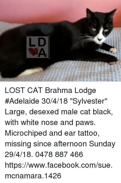 Missing Lost Black And White Cat