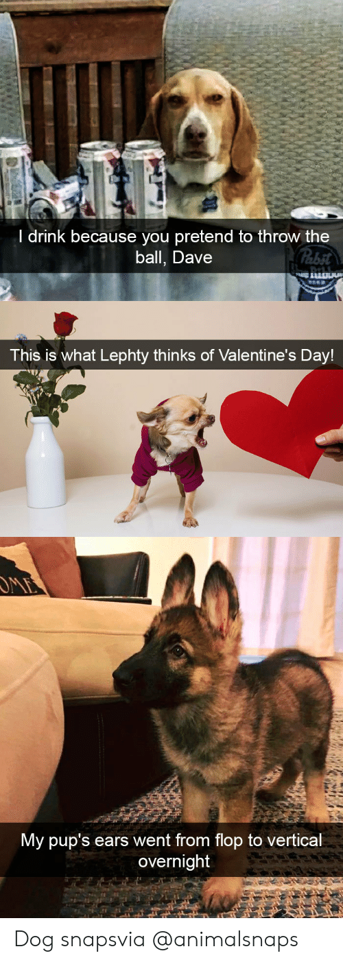 Target, Tumblr, and Valentine's Day: l drink because you pretend to throw the  ball, Dave   This is what Lephty thinks of Valentine's Day!   My pup's ears went from flop to vertical  overnight Dog snapsvia @animalsnaps