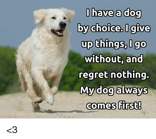 Regret Nothing: l have a dog  by choice,I give  up things, Igo  without, and  regret nothing.  My dog always  by choice, I give  up things, I go  comes first!  comes 「irst! <3